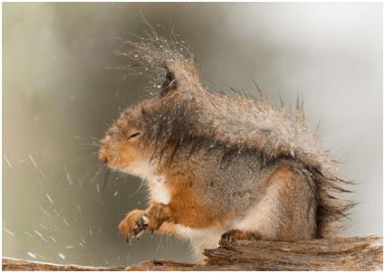 Where Do Squirrels Go During A Hurricane