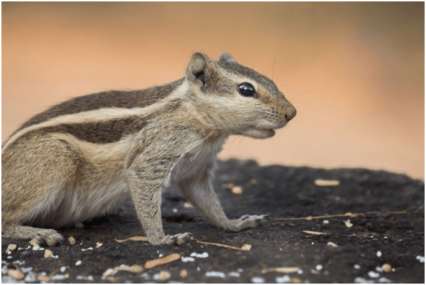 Can You Keep A Squirrel As A Pet
