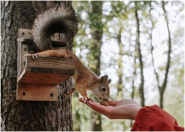 Best Wild Squirrel Food