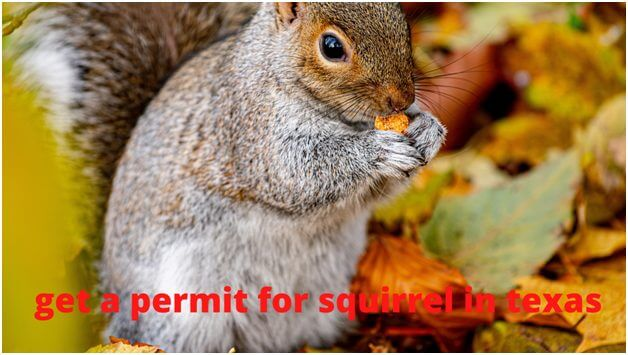 Can you have a pet squirrel in Texas