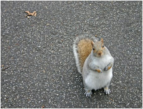 Why Do Squirrels Stare At You