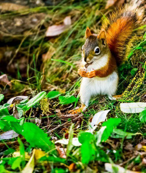 Can Squirrels Eat Raisins